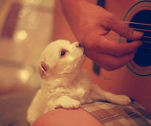 dog, guitar, and life image