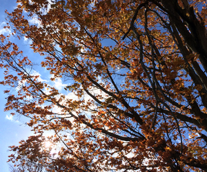 autumn, sky, and clouds image