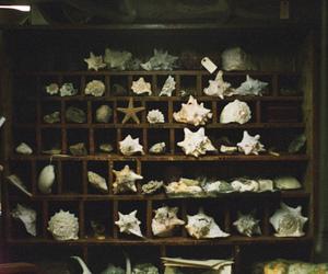 shell, vintage, and sea image