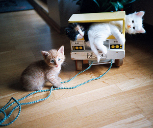 animals, fluffy, and kitten image