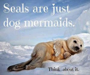 seal, dog, and mermaid image