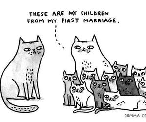 cat, lol, and marriage image