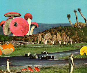 Collage, mushrooms, and shrooms image