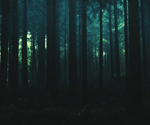 forest, nature, and night image