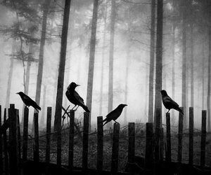 dark, crow, and forest image
