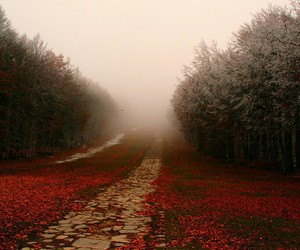 adventure, autumn, and road image