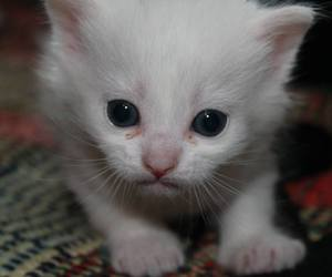 <3, beautiful, and cat image