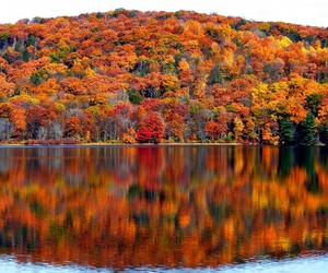 autumn, beautiful, and leaves image