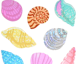 sea, shell, and sticker image