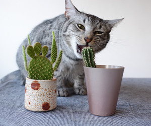 baby, cute, and cactus image