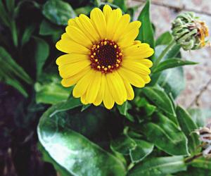 beautiful, flower, and mine image