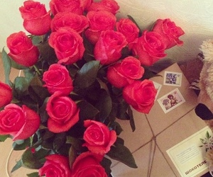 rose, love, and red image