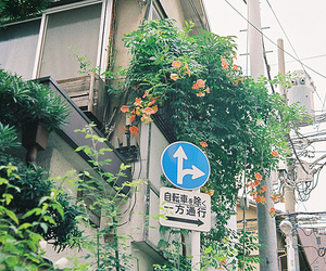 flowers, house, and signs image