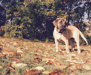 fall, leaves, and puppy image