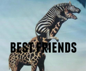 friends, animal, and best friends image