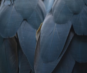 feather, bird, and blue image