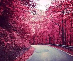 autumn, pink, and place image