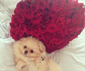 rose, dog, and cute image