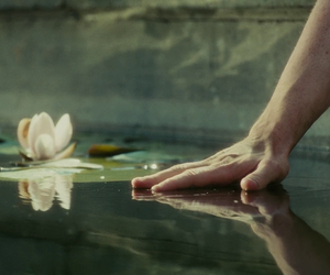 atonement, lily, and water image