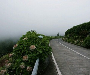 flowers, road, and nature image