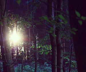beautiful, nature, and peaceful image