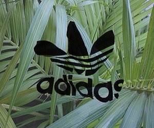 adidas, green, and leaves image