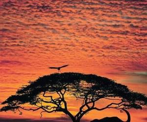 africa, elephant, and sunset image