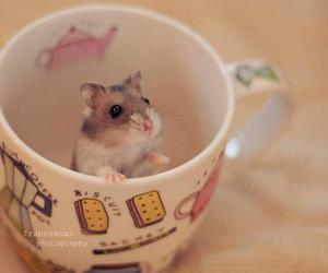 cute, cup, and hamster image