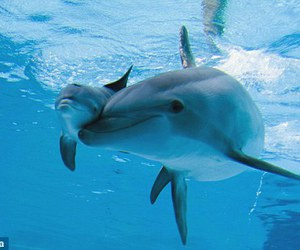 dolphin, animal, and family image