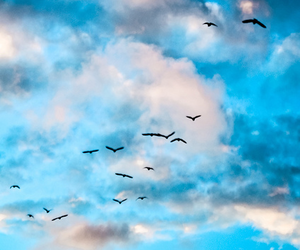 bird, sky, and blue image