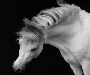 animal, beauty, and black and white image