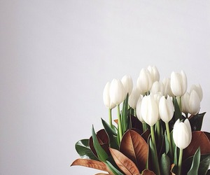 flowers, simple, and tulips image