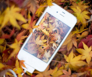 autumn, iphone, and leaves image