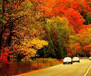 fall, Indian summer, and park image