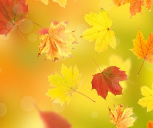 autumn, beautiful, and color image