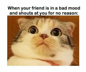 friends, funny, and cat image
