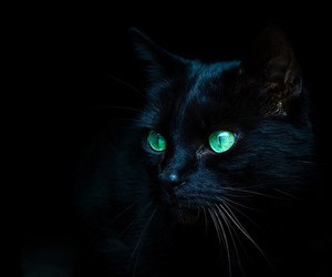 black, shit, and cat image
