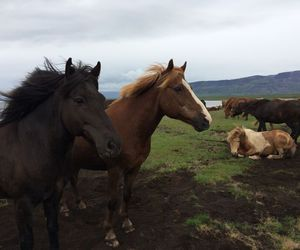 animals, fog, and horses image
