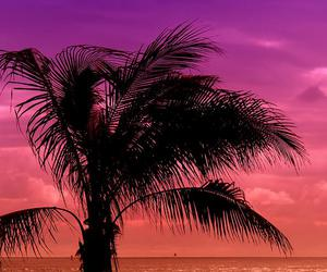 beach, ocean, and palm tree image