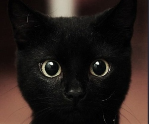 black, cat, and Halloween image