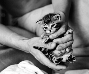 fluffy, kitten, and cute image