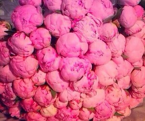 amazing, peonies, and pink image