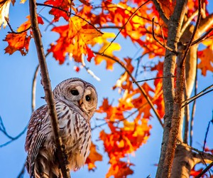 owl, autumn, and tree image