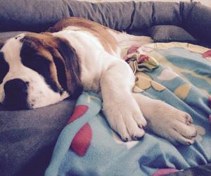 puppy, saint bernard, and sleeping image