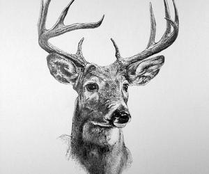 black and white, sketch, and stag image