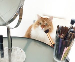 beauty, makeup brush, and cat image