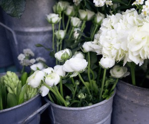 flowers, white, and pretty image