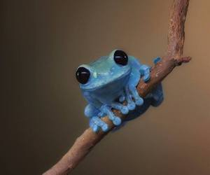 frog, blue, and animal image