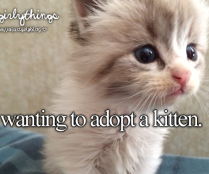 kitten, cute, and cat image