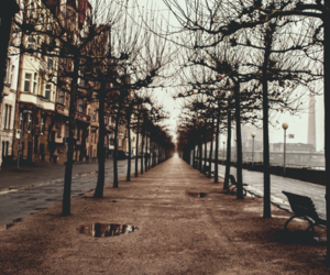 trees, photography, and street image